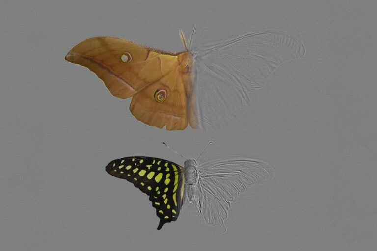 Composite image of the moth Antheraea pernyi (top) and the butterfly Graphium agamemnon (bottom) showing photographs on the left and ultrasound echo image (tomography) on the right.